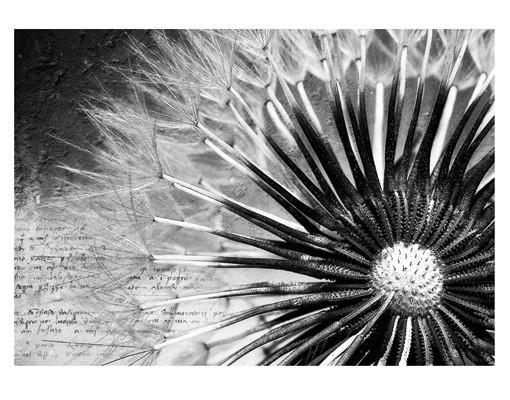 fototapet-poem-cu-papadie-alb-negru-extra-8368489